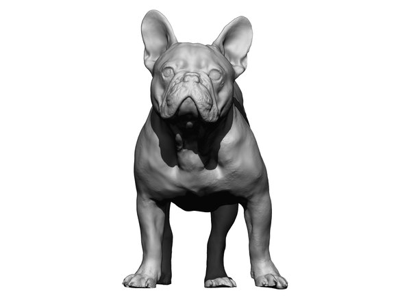 3D dog scanned photogrammetry model