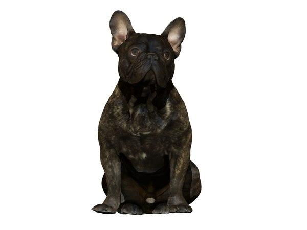 3D real dog