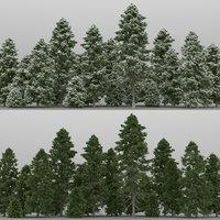 20+20 Pinus Cembra Trees