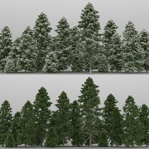 20 pinus cembra trees 3d max