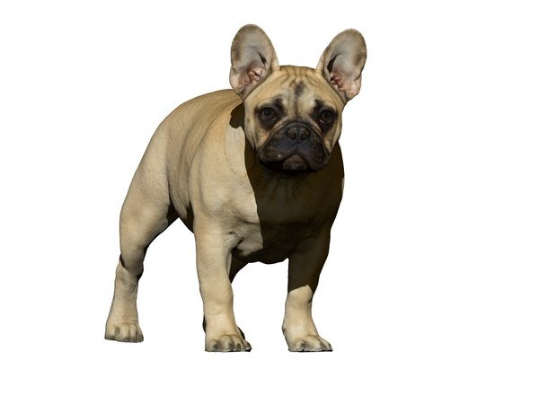 dog scanned photogrammetry 3D model