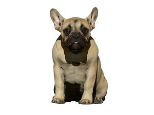 3D dog scanned photogrammetry model