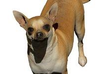 3D dog scanned model
