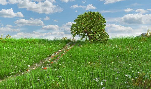grass sky 3D model