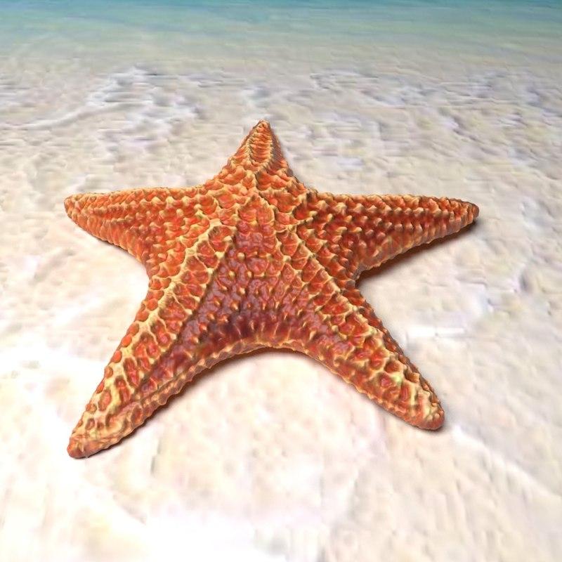 Starfish star fish 3D ...
