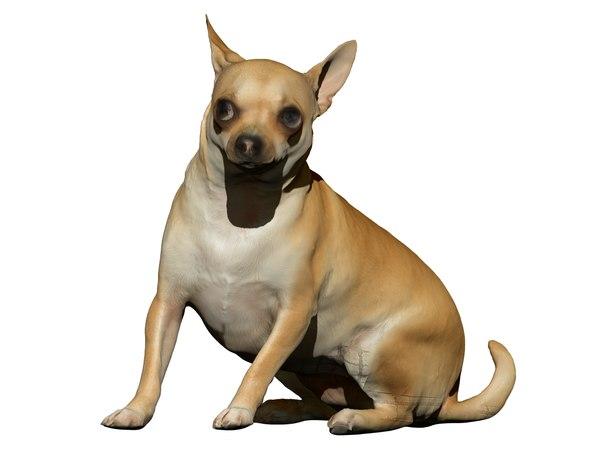 dog scanned photogrammetry model