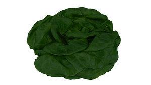 lettuce 3D