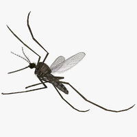 rigged common house mosquito model