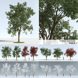 3D trees 7