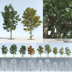 trees 6 3D