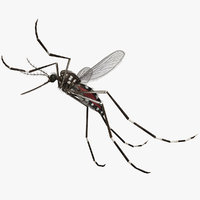 rigged mosquito yellow fever 3D model