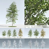 3D model trees 10