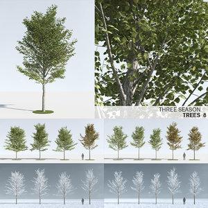 trees 8 3D model