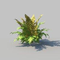 autumn ferns animation 3D model
