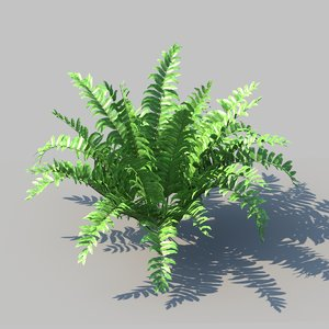 3D boston fern animation