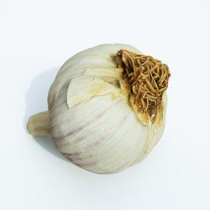 garlic vegetable 3D model