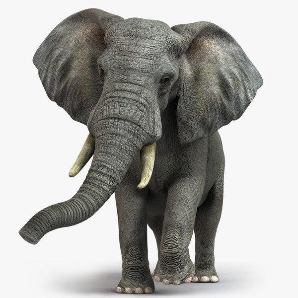 photorealistic african elephant 3d model