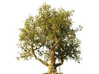 3D tree scanned
