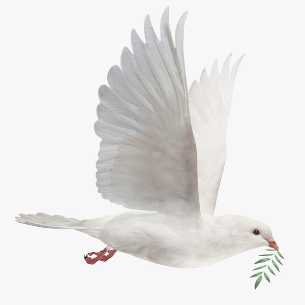 dove flying animation 3D