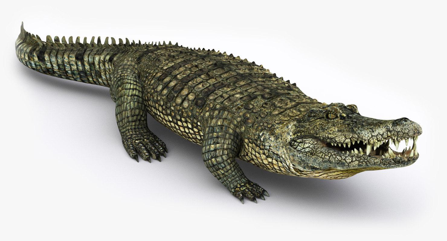realistic crocodile animation 3d model