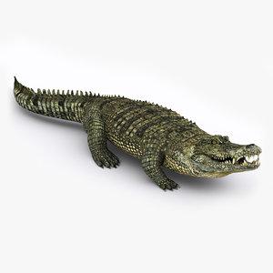 maya realistic crocodile rigged