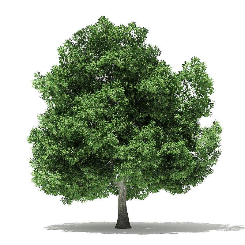 3D champion oak 19m