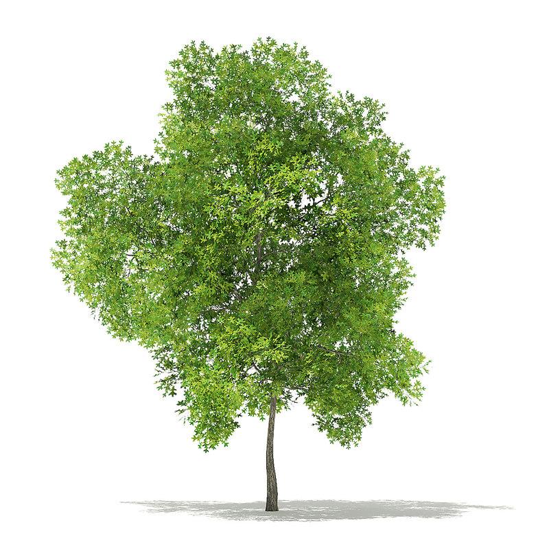 3D model pin oak 7 8m