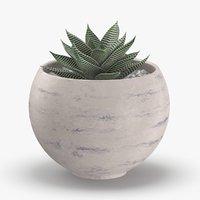 3D succulent-01