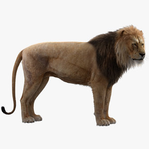 3D model realistic rigged lion animation