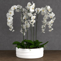 orchid plant model