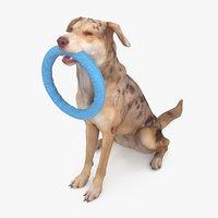 3D dog metis
