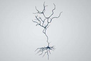 neuron subiculum pyramidal 3D model