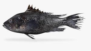 black sea bass 3D
