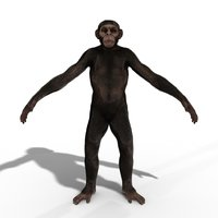 Low Poly Monkey Ape Chimp Chimpanzee Primate