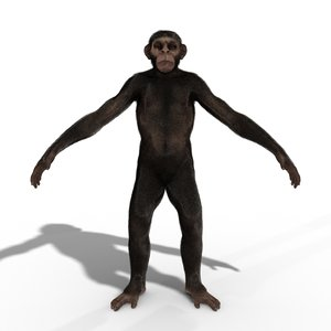monkey ape chimp chimpanzee 3D model