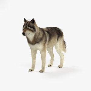 gray wolf model