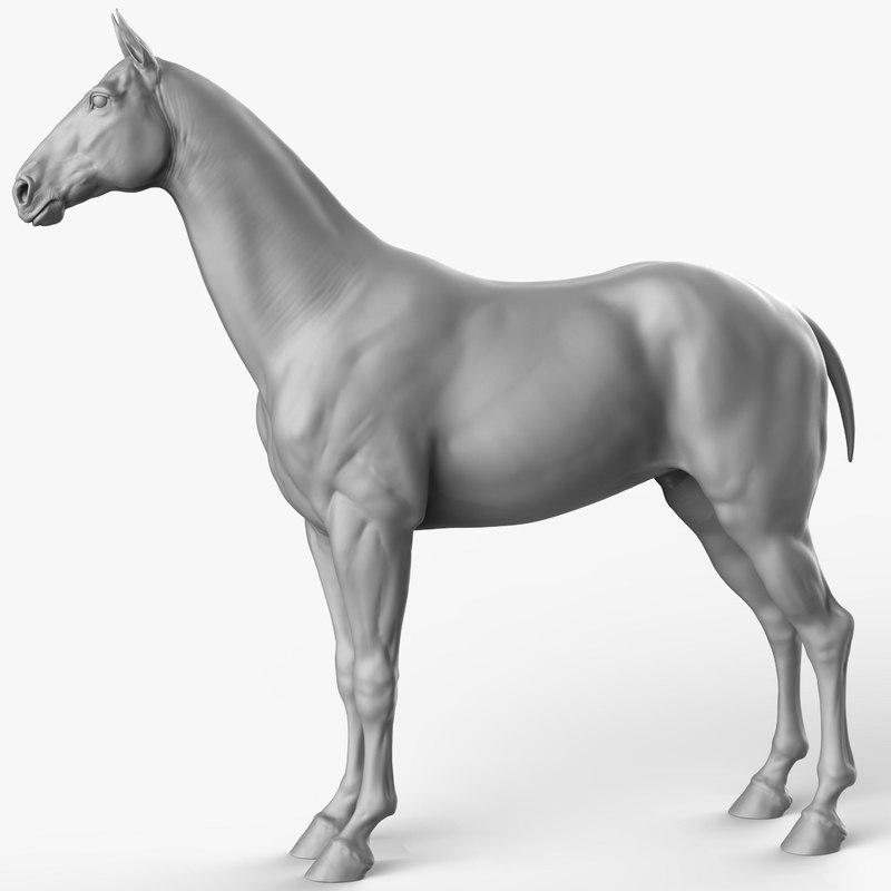 3D horse animal mammal