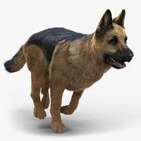German Shepherd (FUR)