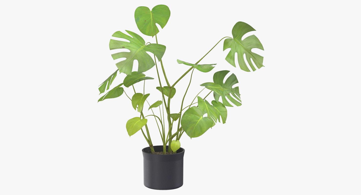 3D house plant 03 model