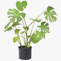 House Plant 03
