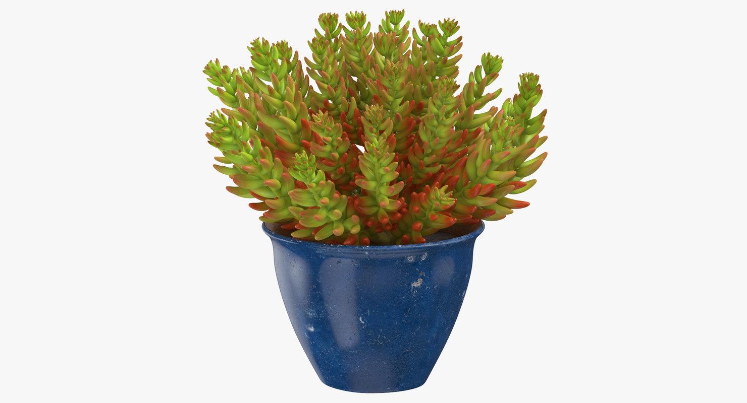 house plant 05 3D model