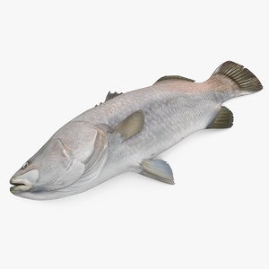 3D asian sea bass fish