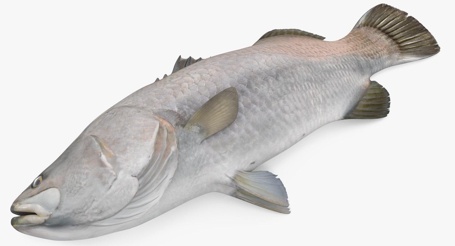 3D asian sea bass fish