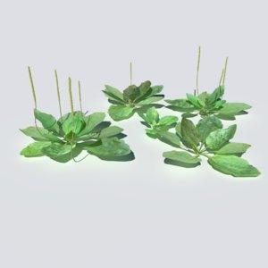 3D plantain pack