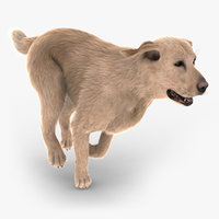 labrador retriever fur animations 3d model