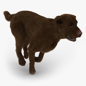 labrador chocolate - fur 3d model