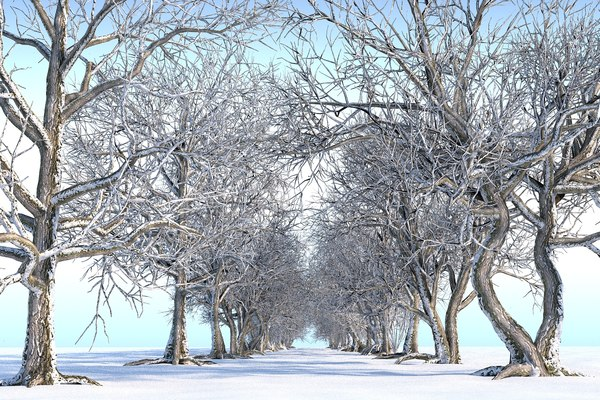 3D winter trees pack 14 model