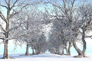 3D winter trees pack 14 model