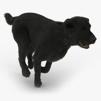 3d labrador black - fur model