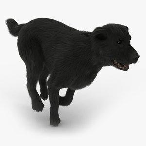 3d labrador black - fur model